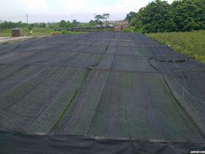Lưới chắn cho cây trồng hoa màu